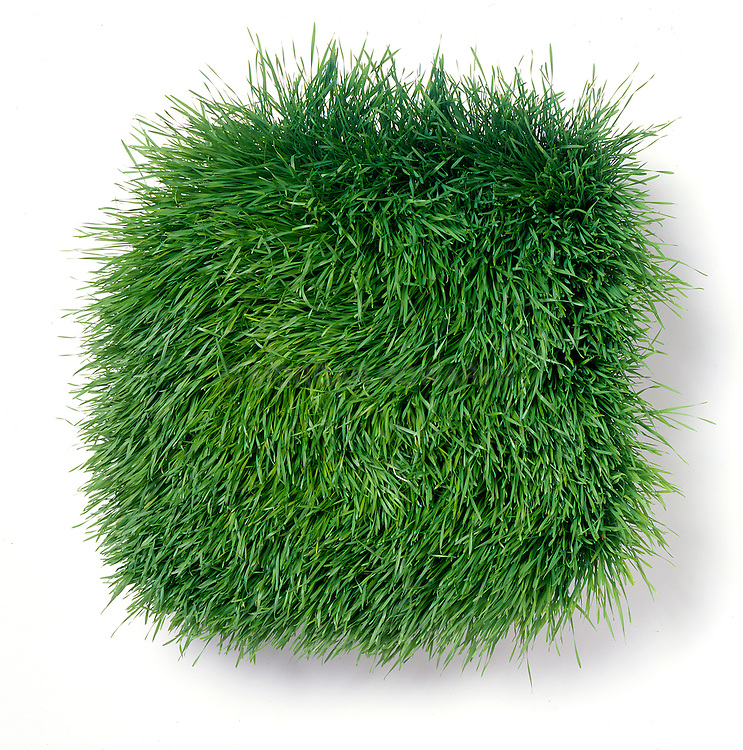 Tuft of soft grass or wheat grass