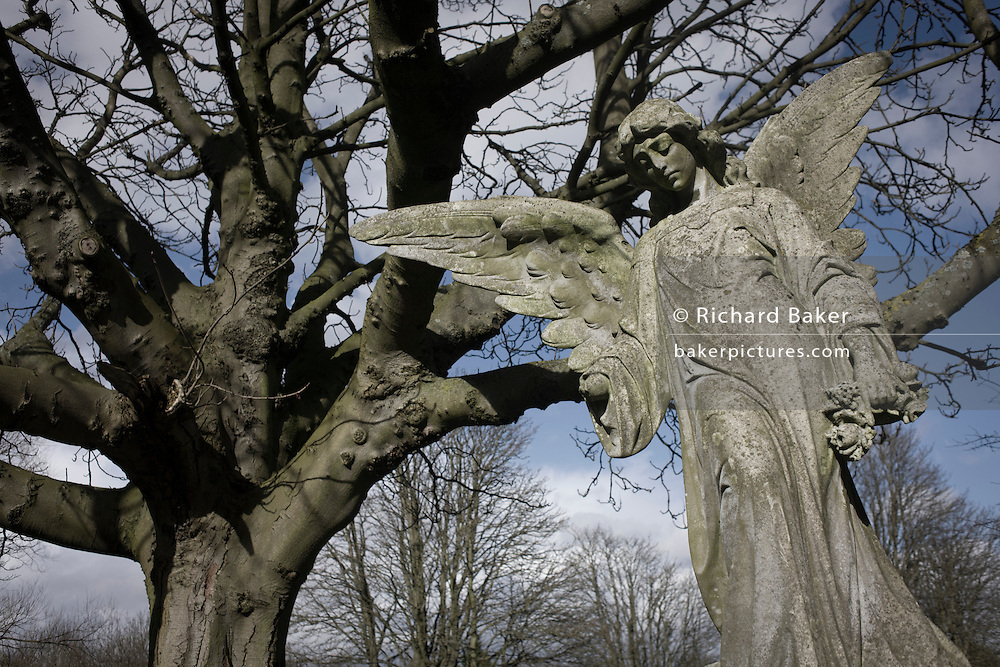 A stone angel and branches of a tree in winter, in a London cemetery.