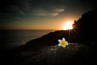 The sun sets behind a frangipani near Uluwatu Temple, Bali, Indonesia.