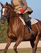 Horse at Carleton Farms ridden by Natalie Clevinger.