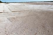 Chalk spread on field after turf grass harvest to decrease soil acidity, Sutton Heath, Suffolk Sandlings, England, UK