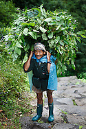 A portrait of a sherpa porter carrying a basket of leaves, Annapurna Sanctuary, Nepal