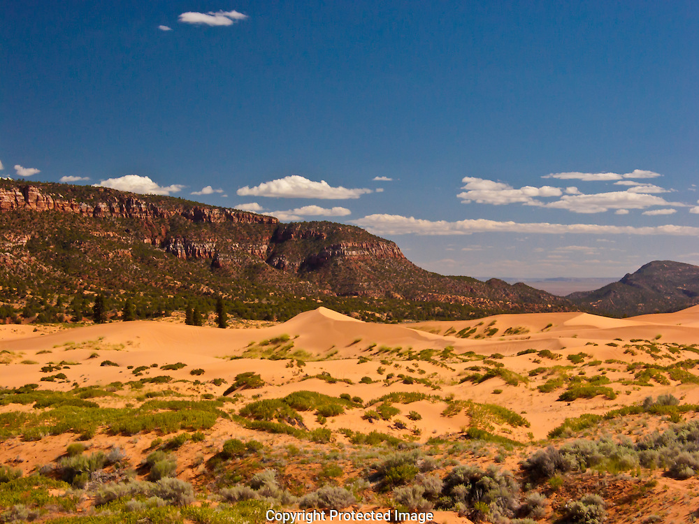 Coral Pink Sand Dunes State Park in South West Utah