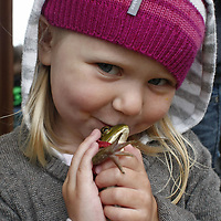 Nora Terjeson, 3, of Jefferson, kisses her frog while waiting to take part in the frog jumping contest during the Jefferson Mint Festival on Sunday, July 17, 2011.