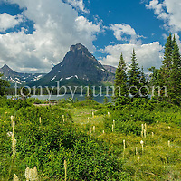 sinopah mountain bear grass along two medicine lake glacier national park