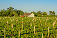 Vineyard, 6175 Oregon Road, Cutchogue, NY