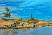 White pine tree on precambrian shield rock on Georgian Bay (Lake Huron)<br />