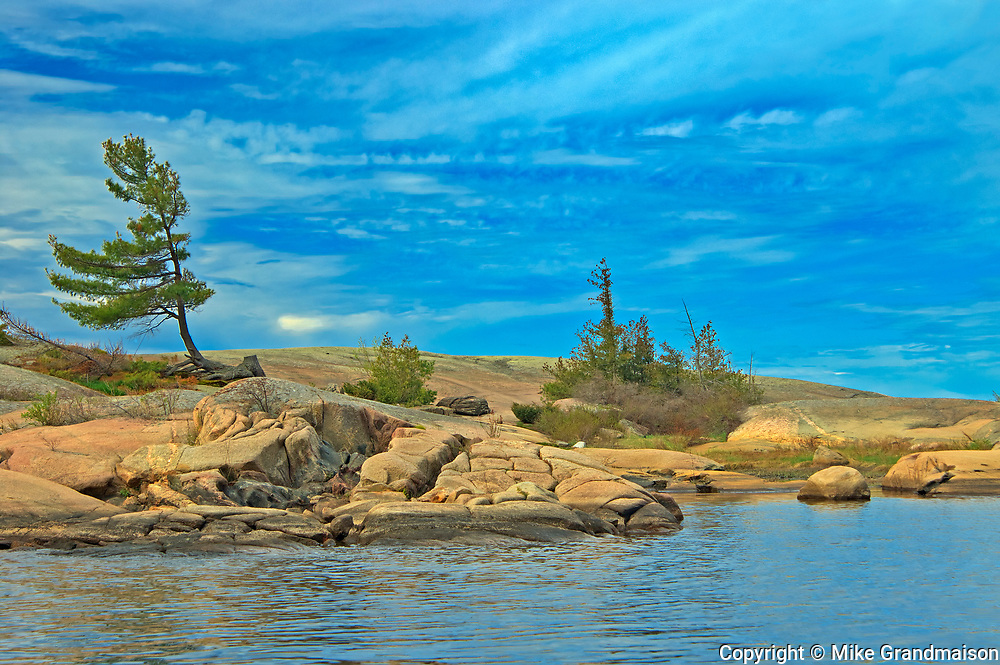 White pine tree on precambrian shield rock on Georgian Bay (Lake Huron)<br />Honey Harbour<br />Ontario<br />Canada