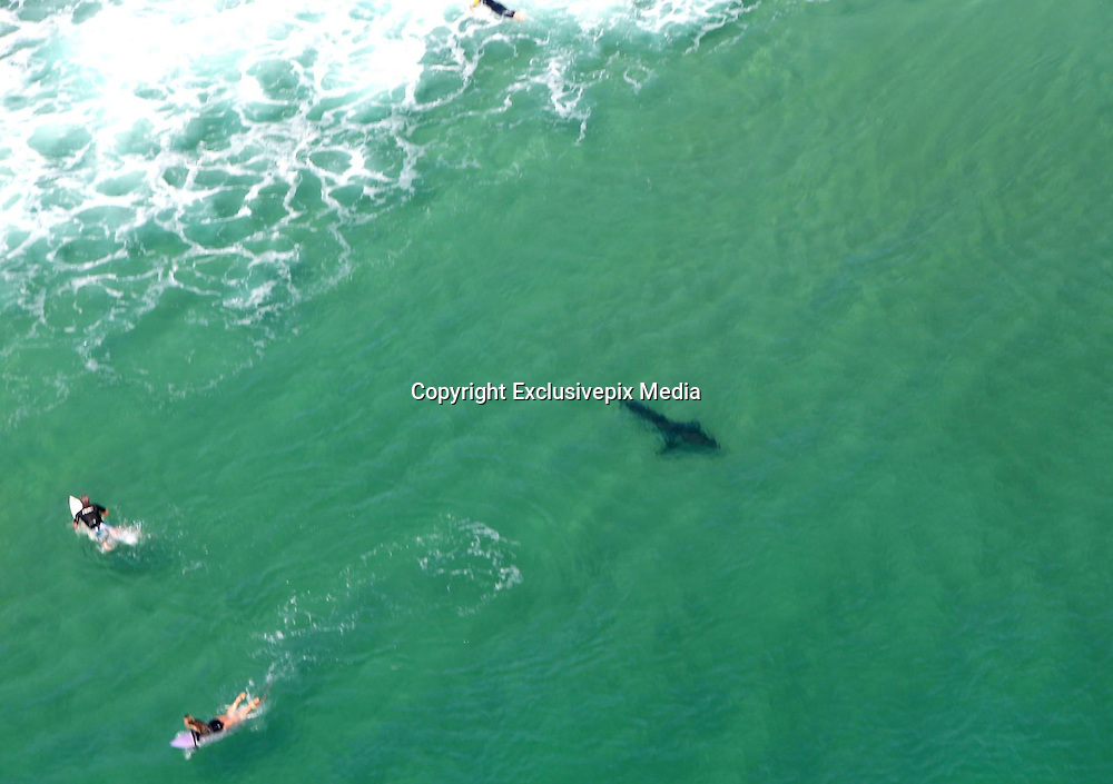 Terrifying helicopter footage shows 3metre Great White shark swimming 'close enough for surfers to pat' off the coast of Ballina<br /> <br /> Terrifying images from a patrol helicopter has revealed the outline of HUGE shark resting just below the surf, clearing more than 10 surfers from the water.<br /> The 3-metre-long great white shark was spotted off the coast of Boulder Beach, Ballina, in New South Wales at about 10.30 am.<br /> The shark was described as 'close enough to pat,'<br /> <br /> 'An excellent result today is an understatement. These photos do not do the situation justice as when we first spotted this shark it was in the line-up with 10 plus surfers.'<br /> A signal was sent out and Boulder beach was cleared immediately in response to the shark alert.<br /> 'The shark continued to swim south towards Flat Rock Beach, where helicopters continued to monitor its movements,' continued the post.<br /> New South Wales has been ranked the top state with 128 shark related fatalities with 457 people attacked.<br /> <br /> Figures have shown 95 percent of those attacked and killed in Australia-wide have been men, as predicted from data collected by the Shark Research Institute since 1788.<br /> Two fatalities have been recorded this year when last reviewed in late September.<br /> In a similar incident near a Beach in Byron Bay another shark was spotted on Saturday morning.<br /> This shark did not pose a threat and beach-goers continued to enjoy the warm spring weather.<br /> ©Rotorwing Helicopter/Exclusivepix Media