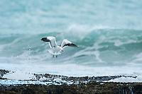De Hoop Marine Protected Area, Western Cape, South Africa