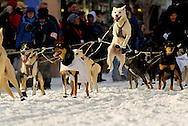 04 March 2006: Anchorage, Alaska - Excited dog from the team of Trent Herbst takes to the air prior to the Ceremonial Start in downtown Anchorage of the 2006 Iditarod Sled Dog Race
