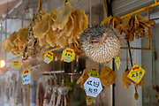 Spot-fin porcupinfish (Diodon hystrix) and other dried fish for sale at Tai O Market Street, Tai O Fishing Village, Lantau Island, Hong Kong, China.