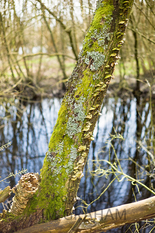 Fungus, moss and lichens growing on tree trunk in damp, dark area of The Somerset Levels Nature Reserve in England, UK