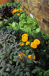 Narrow bed by house with lettuce, marigolds and sage divided by low box hedges.