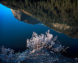 Reflection in pond of hoar frost on shrub and mountain in perfectly still water