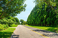 Hedges Arborvitae 'Emerald Green',, Country Road, Manhanset Rd, Shelter Island, NY