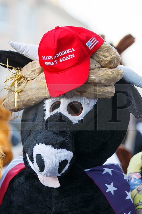 © Licensed to London News Pictures. 11/12/2016. London, UK. A horse costume features Donald Trump's 'Make America Great Again' hat as The London Pantomime Horse Race takes place in Greenwich, London on Sunday, 11 December 2016. Contenders in pantomime horse costumes take part in comedy race through the streets of Greenwich and use pubs as race checkpoints to raise money for charity. Photo credit: Tolga Akmen/LNP