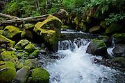 Mount Rainier Park, Washington.