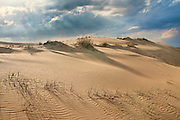 Sand dunes at Jockey's Ridge State Park  Nags Head NC.