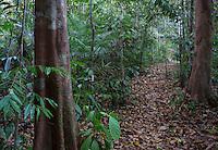 Path in a tropical rainforest, Taman Negara National Park, Malaysia