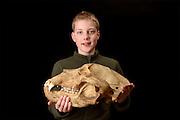 A boy holding a Kodiak bear skull (Ursus arctos middendorffi)