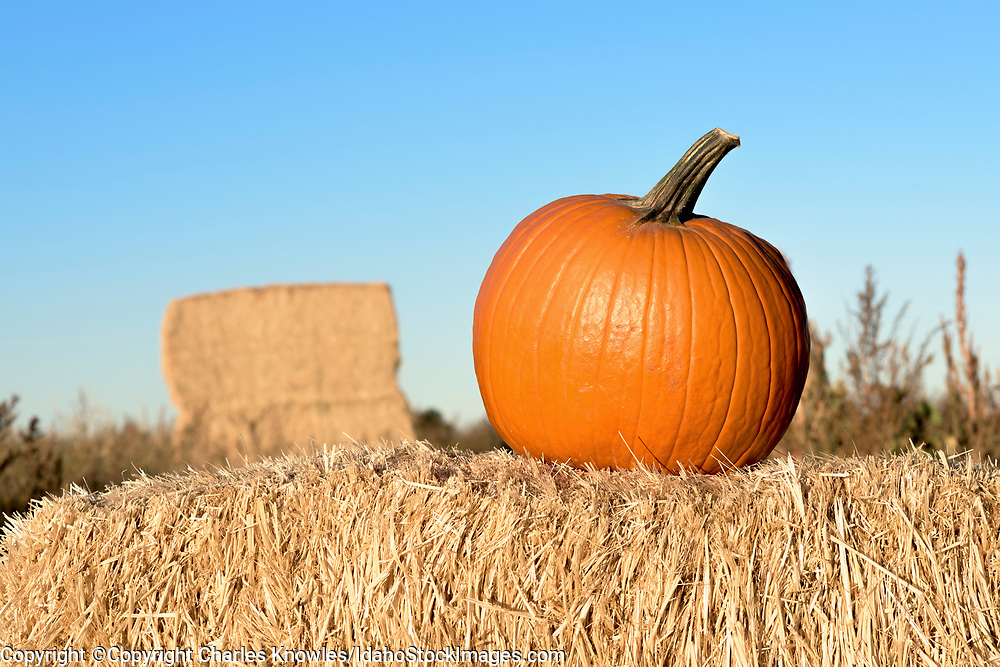 Hay bale with a halloween pumpkin on it.