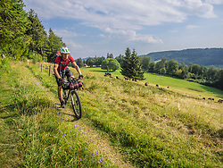 Mountain biker through village trail near Todtnauberg with cows on meadow in the background, Baden-Wuerttemberg, Germany