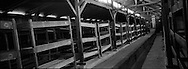 I letti all'interno di una delle baracche di legno, costruite sul pregetto id stalle per i cavalli