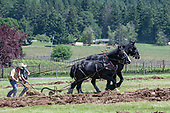 Mad Violets horse plowing May 2019