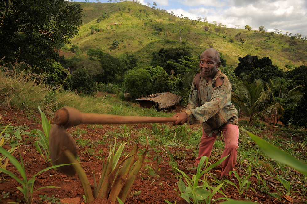"KIROKA, TANZANIA -  13-11-01  -  Farmer Rajabu Juma weeds on the steep incline of his farm in Kiroka on November 1. ""Other farmers are skeptical,"" Juma says of contour farming. ""They see digging trenches as an inconvenience, but I've seen the benefit. We are able to limit soil erosion as well as preserve water and fertility."" An FAO project to strengthen capacity of farms for climate change is underway in Kiroka, Tanzania. ""It's something we may call climate-smart agriculture,"" says mission project co-ordinator Prof. Henry Mahoo, who teaches at the Sokoine University of Agriculture. The project aims to improve land and water management, promote climate resilient agriculture and encourage dialogue and understanding regarding climate change adaptation practices.   Photo by Daniel Hayduk"