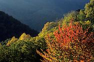France, Languedoc Roussillon, Gard, Lozère, Cévennes, merisiers