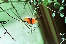 10 June 2001: Miller Park Zoo<br /> butterfly<br /> Archive slide, negative and print scans.