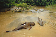 Stranded Catfish<br />