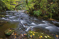 Whatcom Creek in Autumn Bellingham, Washington