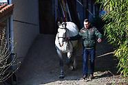 2018-02-horse-of-belgium