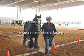 45. GROUND OBSTACLE IN-HAND JR HORSE - GO