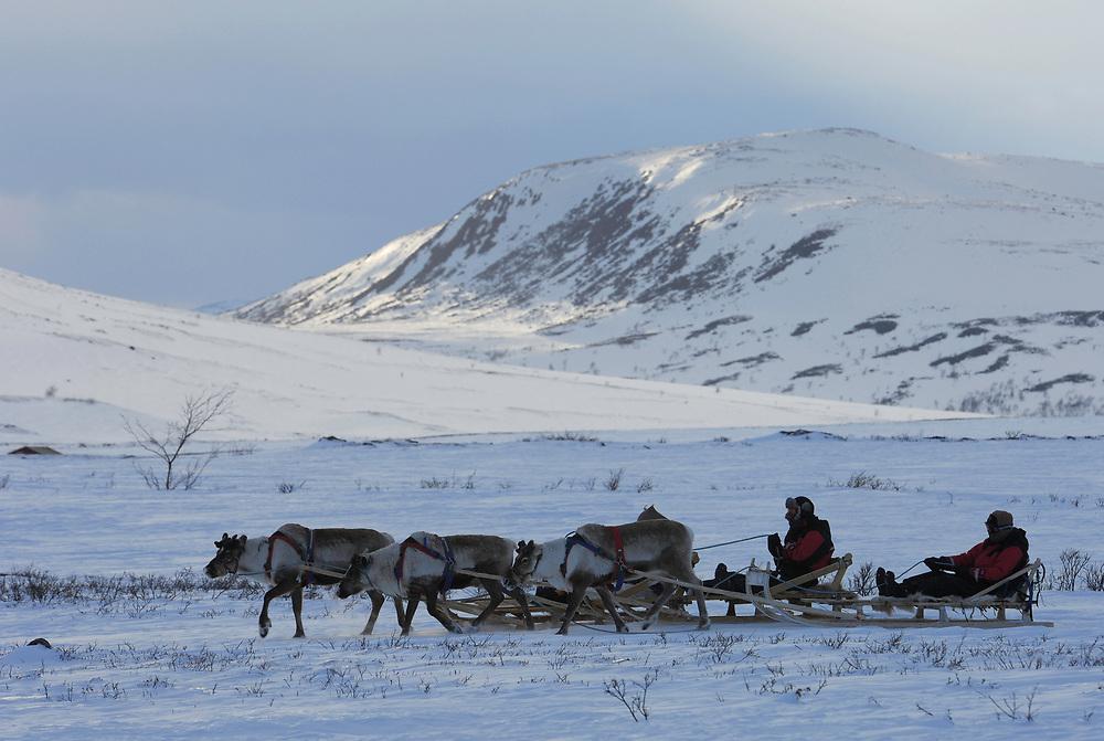 Ecotourists on a Reindeer sledding safari, Sami tour outfitter Per-Nils Päiviö, Nature's Best, Övre Soppero, Lapland, Norrbotten, Sweden.