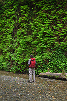Male hiker exploring Fern Canyon, Prairie Creek Redwoods State Park, California