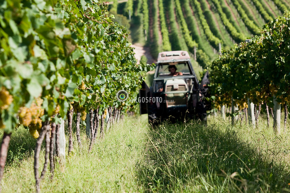 Tractor with Thermal Protection Control - TPC in vineyards / Trator utilizando Tratamento fitosanitario vento quenten nas videiras. Ano/Year 2010