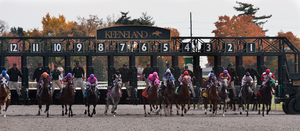 Thoroughbreds break from the gate at Keeneland during the 2009 Fall Meet.