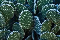 Cactus at Phoenix Desert Botanical Gardens, Phoenix, Arizona, USA.