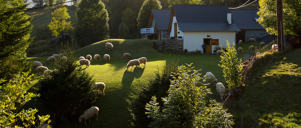 Sheep grazing at homestead farm in the Pyrenees, Parc National des Pyrenees Occident, France