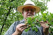 Dieter Walz mit Mispeln, Odenwald, Hessen, Deutschland