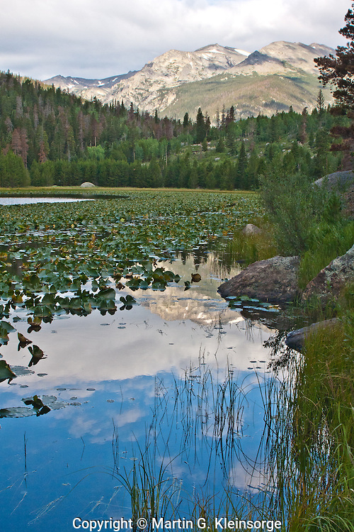 Pond lilies and reflections of 12,928 ft. Stones Peak in Cub Lake.  Rocky Mountain National Park, Colorado