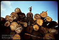 Worker stands atop pile of logs at saw mill near Rio Branco, capital of Amazon state of Acre. Brazil
