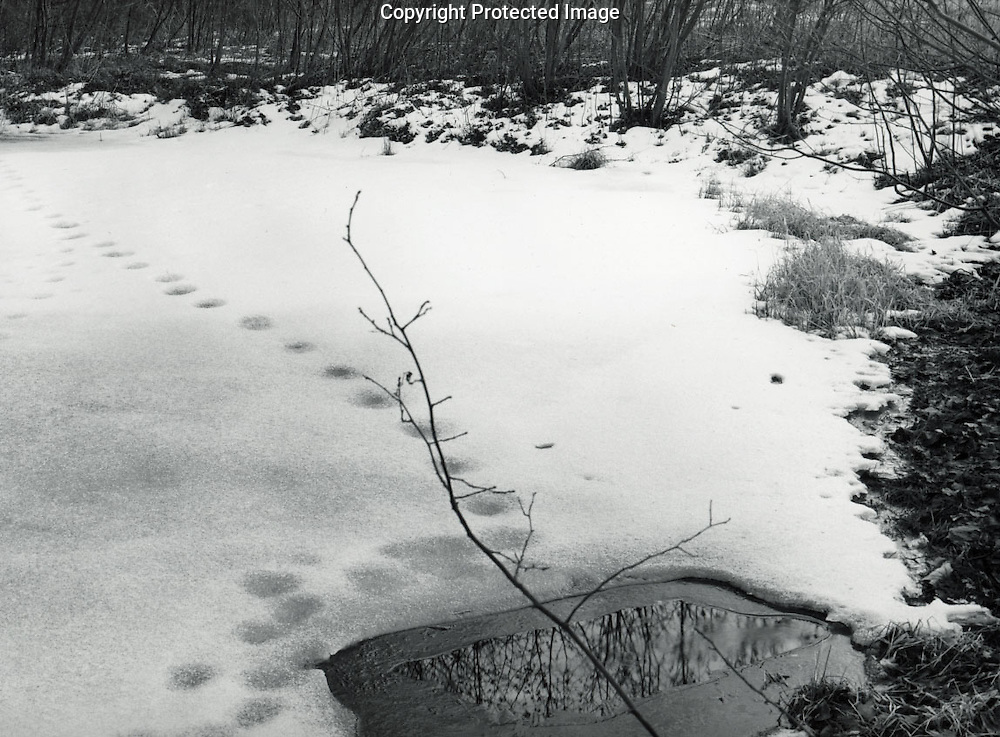 Pond, Frost Farm, Winter, 1989