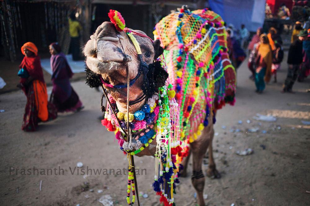 A man walks past the fair grounds in Pushkar, India, November 5, 2011.  Photographer: Prashanth Vishwanathan