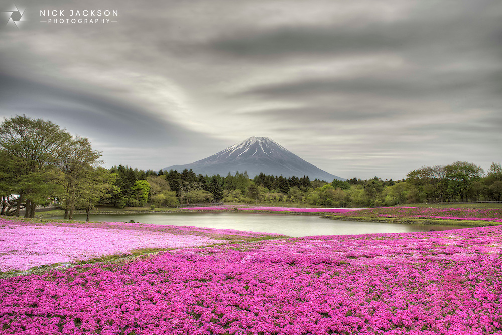 Once a year, close to Mount Fuji in Japan, the Fuji Shibazakura Festival is held. For a short time fields of pink and white moss sweep across the landscape, and luckily for me I was there just at the right time.