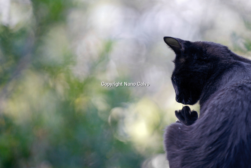 Black cat in nature