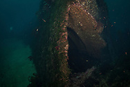 The wreck of the Waikare 1910 at Stop Island, Dusky Sound, Fiordland. Friday 04 April 2014<br /> Photograph Richard Robinson &copy; 2014<br /> Dive Number: 514<br /> Site: The Wreck of the Waikare 1910, Stop Island, Dusky Sound, Fiordland.<br /> Boat: Tutoko<br /> Dive Ian Skipworth<br /> Time: 15:43<br /> Temperature:  14.8<br /> Rebreather: Inspiration Vision. Total Time On Unit: 315:49 hh:mm<br /> Maximum Depth: 18.3 meters<br /> Bottom Time: 122 minutes<br /> Mix: 21<br /> CNS: 40%<br /> OTU: 38%<br /> Bottom Time to Date: 34,682 minutes<br /> Cumulative Time: 34,804 minutes